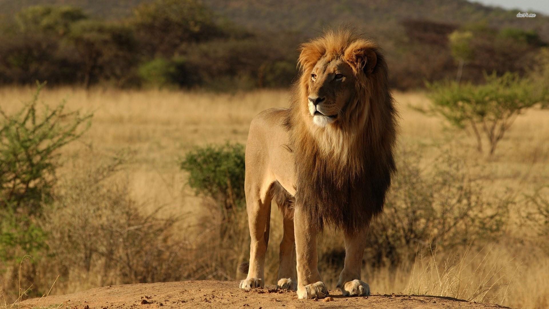 The Big 5 Animals Of Africa   Safari Sue